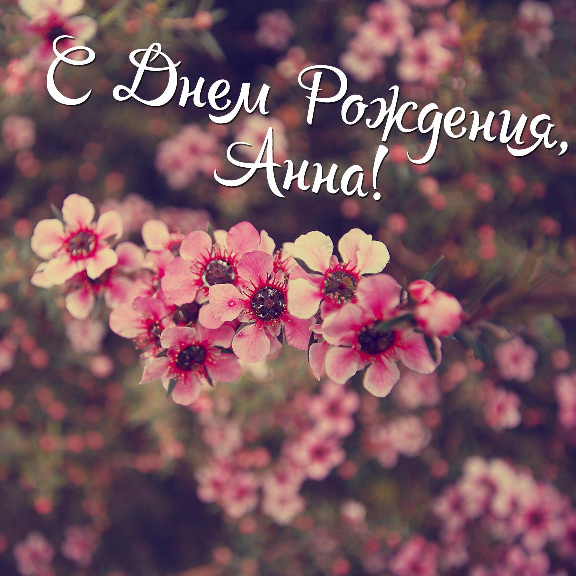 Открытки с днем рождения с именем аня, картинках