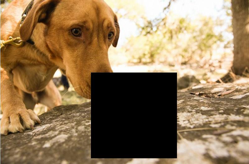 просидели картинки на игре черным квадратом сделать универсальный